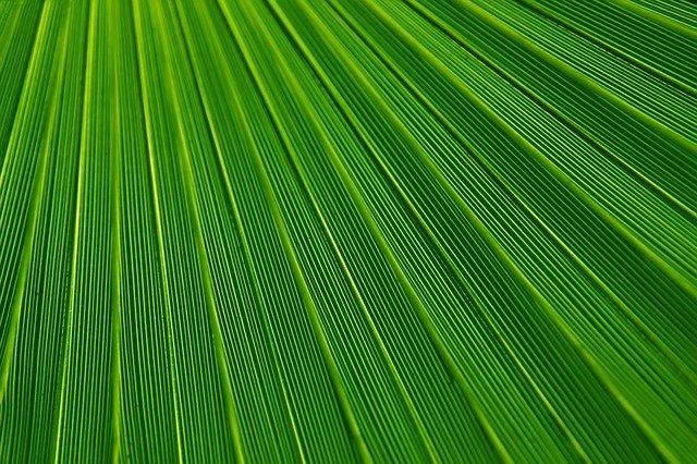 leaf-21851_640
